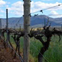 Day trips from Sydney No 2. Hunter Valley